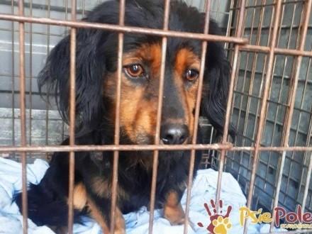 ELIASZ-Mały spokojny bardzo smutny psiak szuka domu  adopcja