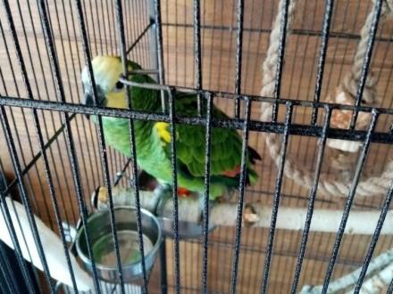 Sprzedam papugi amazonkie
