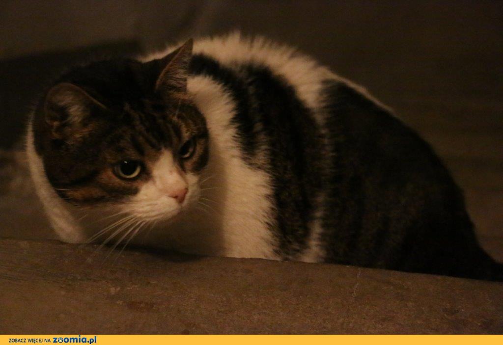 Koci dramat! Kochającego domu szuka koci senior Matylda