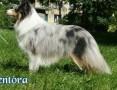 Salon dla zwierząt SPA 4 DOG ,  dolnośląskie Jelcz-Laskowice