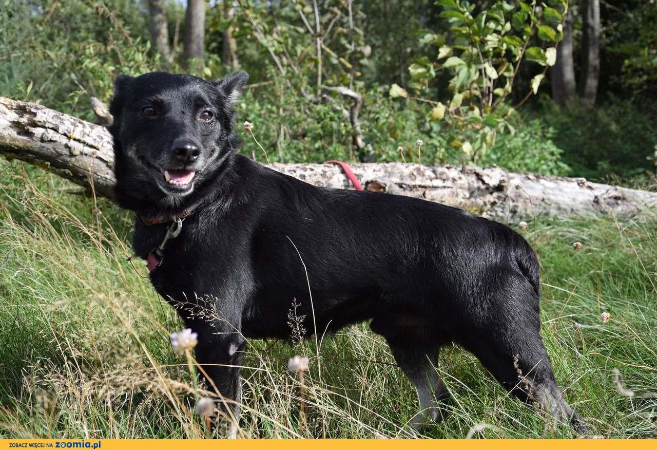 Niewielki Czaruś, wesoła psinka szuka domu!