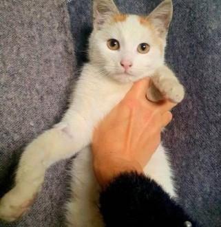 FILIP - 5 miesięczny  kochany kotek szuka domu!   mazowieckie Warszawa