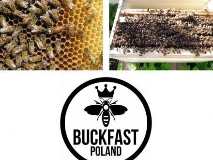 Pszczoły  rodziny pszczele  odkłady pszczele