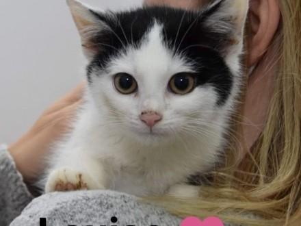 4-miesięczne kotki szukają domów!