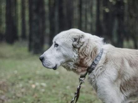 Boris to pies co miłości pragnie też!