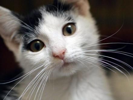 Malutki Bibit do adopcji   śląskie Gliwice
