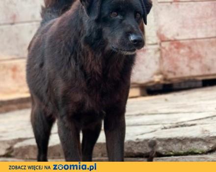 Czy ktoś pokocha niedźwiadkowatego Murzynka?