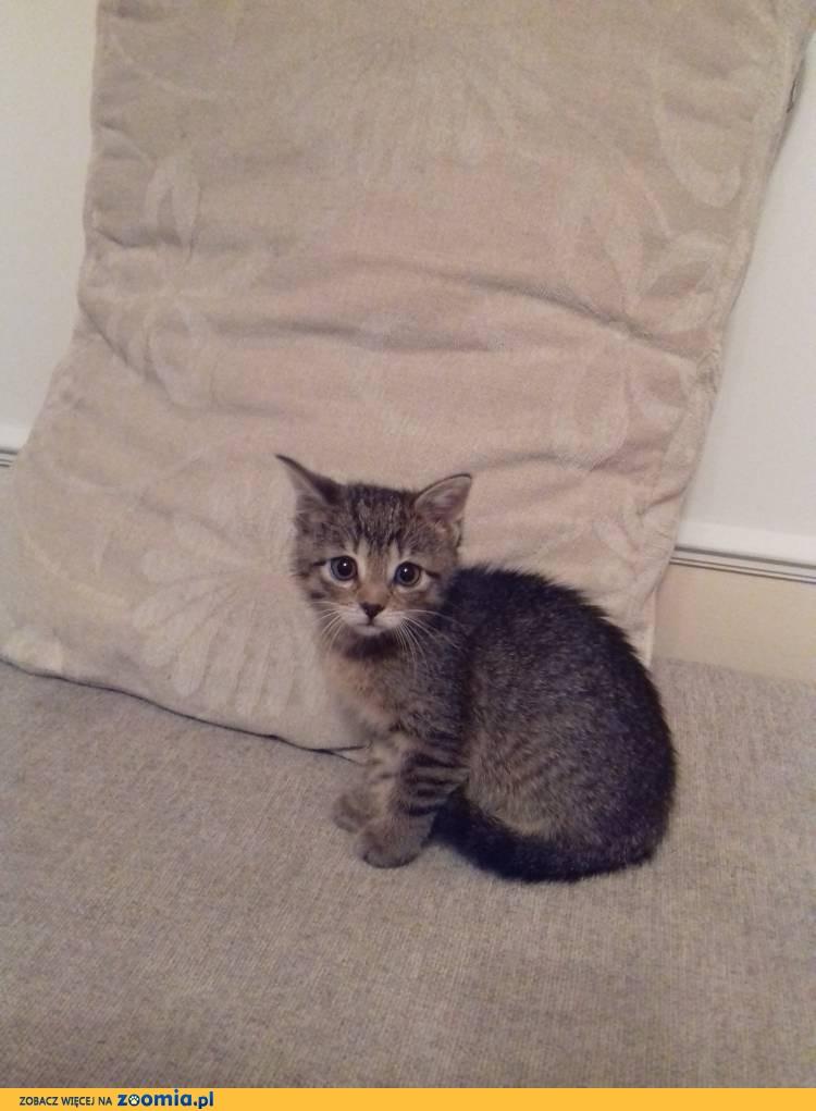 3 miesięczna kotka Florka szuka domu