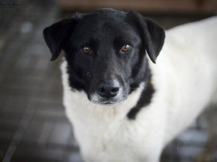 Apollo  grzeczny  niekonfliktowy psia zasługuje na super dom!
