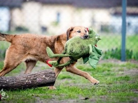 LEJLA nietuzinkowa psia aktywnych ludzi szuka   śląskie Gliwice