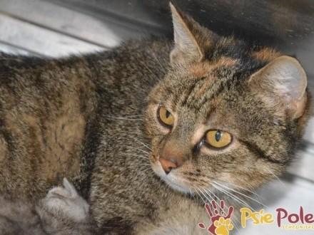 DRZEMKA-piękna  młoda  kochana koteczka-wspaniala mamusia  adopcja