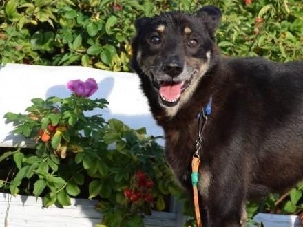 Przyjazny psi senior szuka kochającego domu!