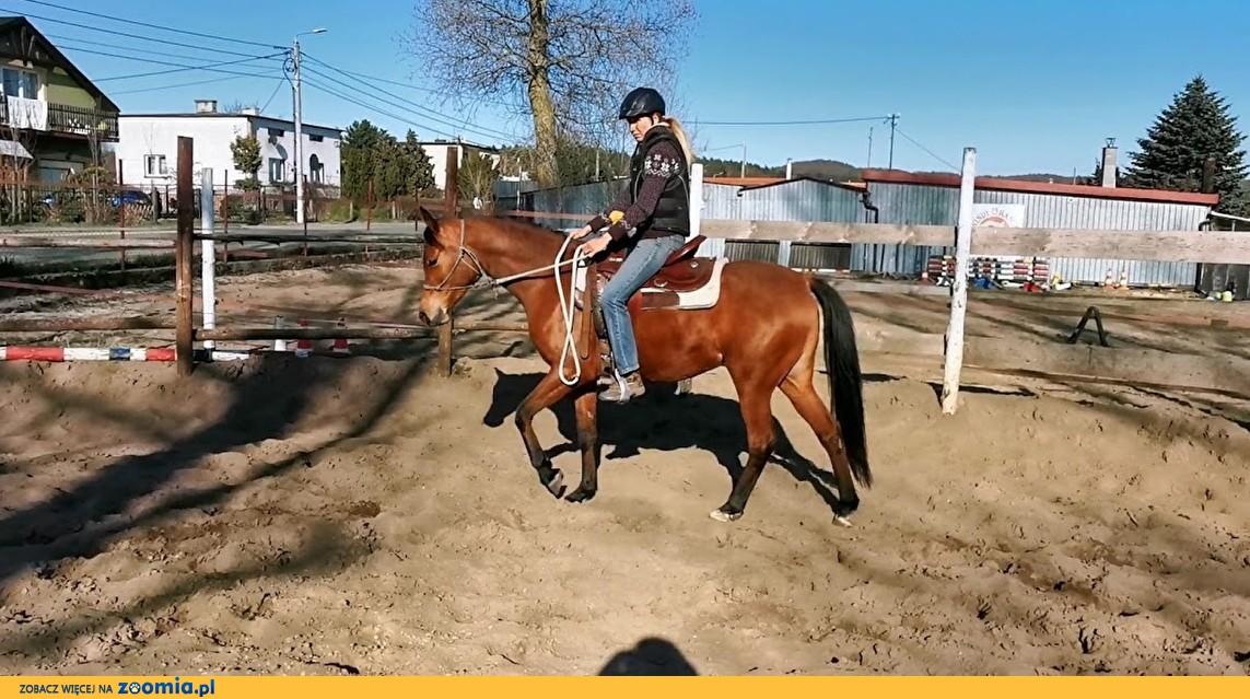 Kupie konia min.170cm, min.4 lata