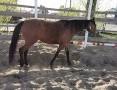 'Kupie konia min.170cm, min.4 lata