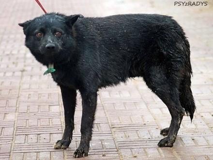 Tymek  psiak uratowany ze schroniska szuka domu!