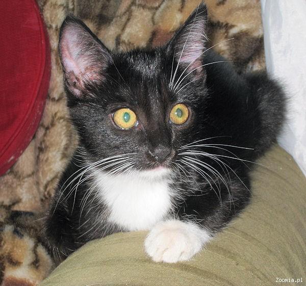 Febe trzymiesięczna koteczka porzucona na działkach