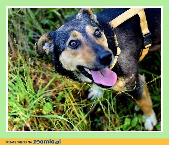 Mały 8 kg, młody, do domu z ogródkiem,wesoły,przytulaśny psiak RIVER_Adopcja_