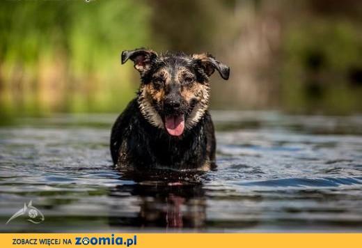 Sara - młoda kandydatka na psa idealnego;-) Skuś się!,  mazowieckie Warszawa