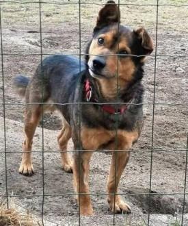 MISIO - kochany  łagodny psiak szuka domu   małopolskie Kraków