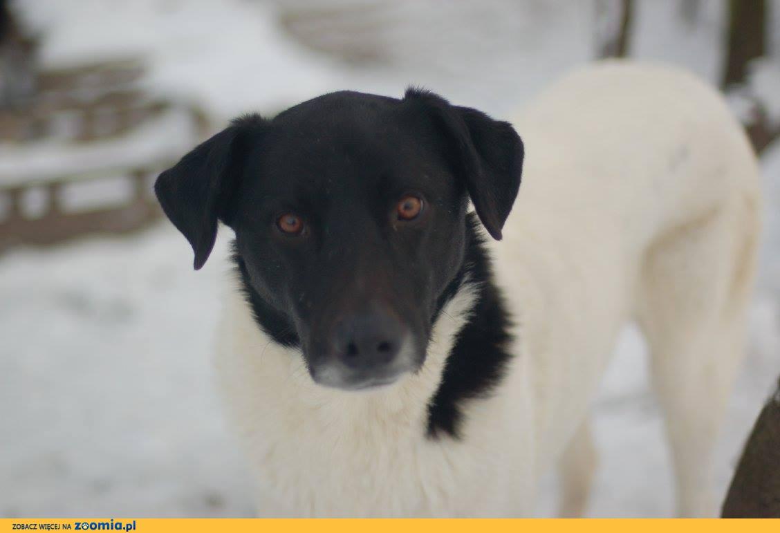 Apollo, przyjazny, majestatyczny pies do pokochania!
