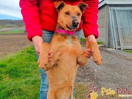 SZYMPEK-superaśny  wesoły  pogodny zwierzak szuka domu  adopcja