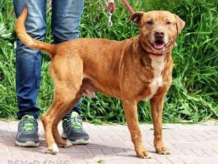 BAMBUS otwary  sympatyczny pies szuka domu