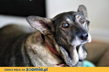 LUSIA - wilczasta świetna sunia szuka kochającego domu,  mazowieckie Warszawa