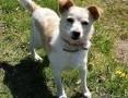 'RAMBO - wrażliwy, malutki, 6 kg psiak szuka domu,  mazowieckie Warszawa