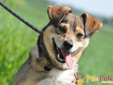 KACHUŚ-wesoły  radosny  energiczny młody psiak-3-4 lata-adopcja