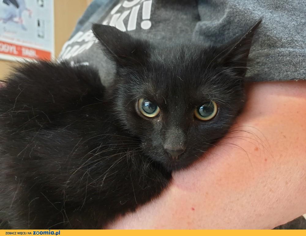 Koteczka Madzia szuka domu