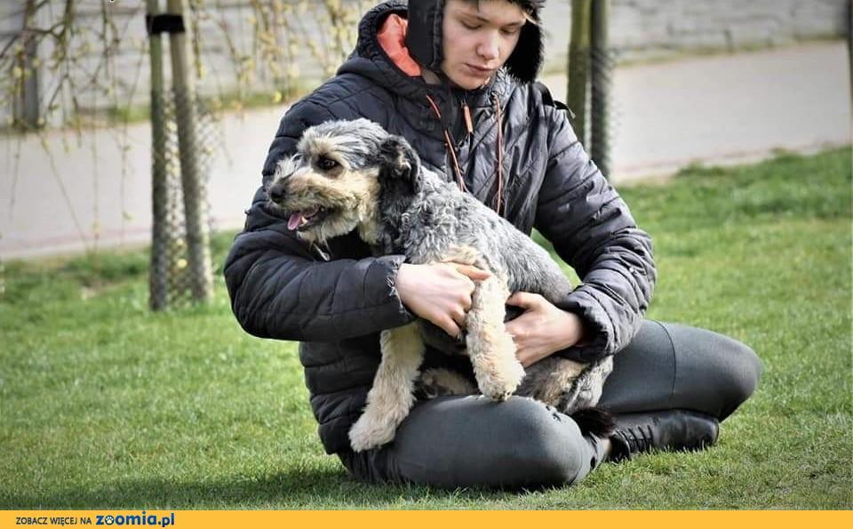 FOLTEST piękny psiak kochający ludzi i świat marzy o domku gdzie zazna szczęścia i miłości ,  Kundelki cała Polska