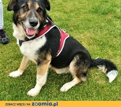 LEON - duży, łagodny psiak błaga o dom!,  mazowieckie Warszawa