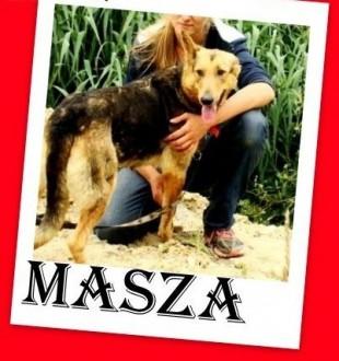 Boi się zastrzyków  wtula się wtedy w wolontariuszkę owczarek suczka MASZA   małopolskie Kraków