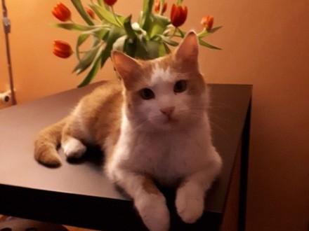 Kotka Karotka szuka kochającej rodziny!
