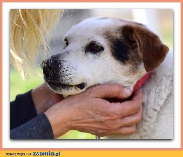 Średni,zaszczepiony, łagodny,spokojny,rodzinny psiak TERY_Adopcja_
