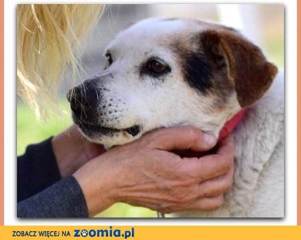 Średni zaszczepiony  łagodny spokojny rodzinny psiak TERY_Adopcja_