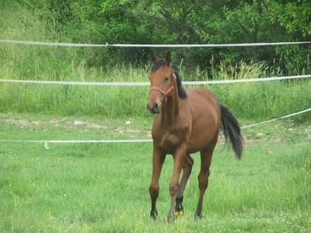 Kupię konia do małego sportu