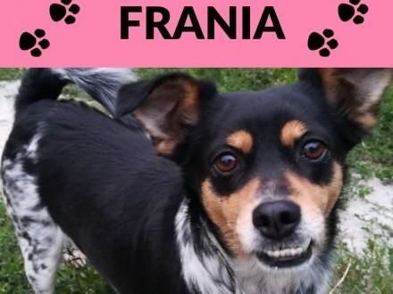 Frania-drobna 2latka bardzo ufna i kontaktowa