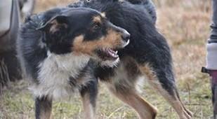 Przefajny Figiel - towarzyski  wesoły psiak - wniesie do rodziny mnóstwo psiej radości   dolnośląskie Wrocław