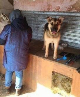 Ratujemy psy z Białorusi - Paula   pomorskie Gdańsk