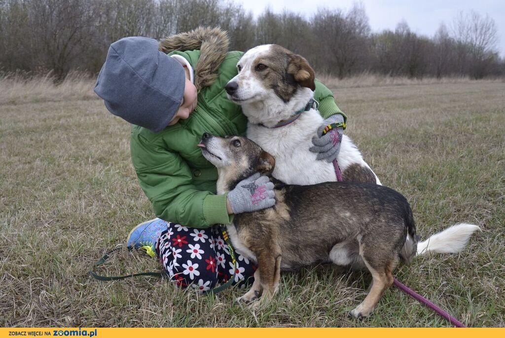 Bąbelek i Iskierka - prawdziwa psia przyjaźń do ADOPCJI!