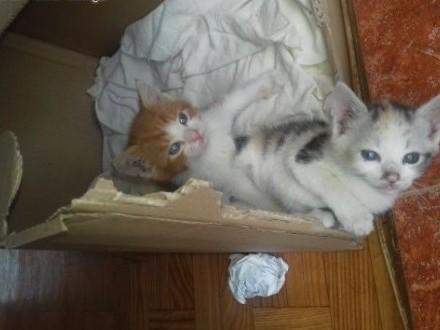 Oddam kotki - parkę w dobre ręce   łódzkie Radomsko