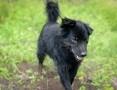 Franek, uratowany od śmierci, wesoły, przyjazny psiak do adopcji!