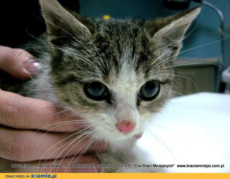 Dwa cudne kociaki – koteczki szukają nowych opiekunów