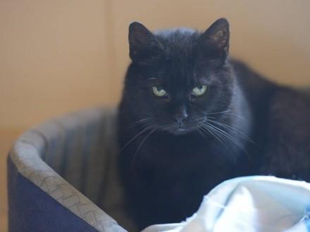 Koty  koteczki - dorosłe  maluchy - pilnie szukają domów!