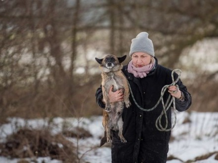 Peperek - mały tygrysek szuka domu!   Kundelki cała Polska