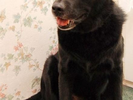BRANDO-wspaniały pies czeka na swój dom