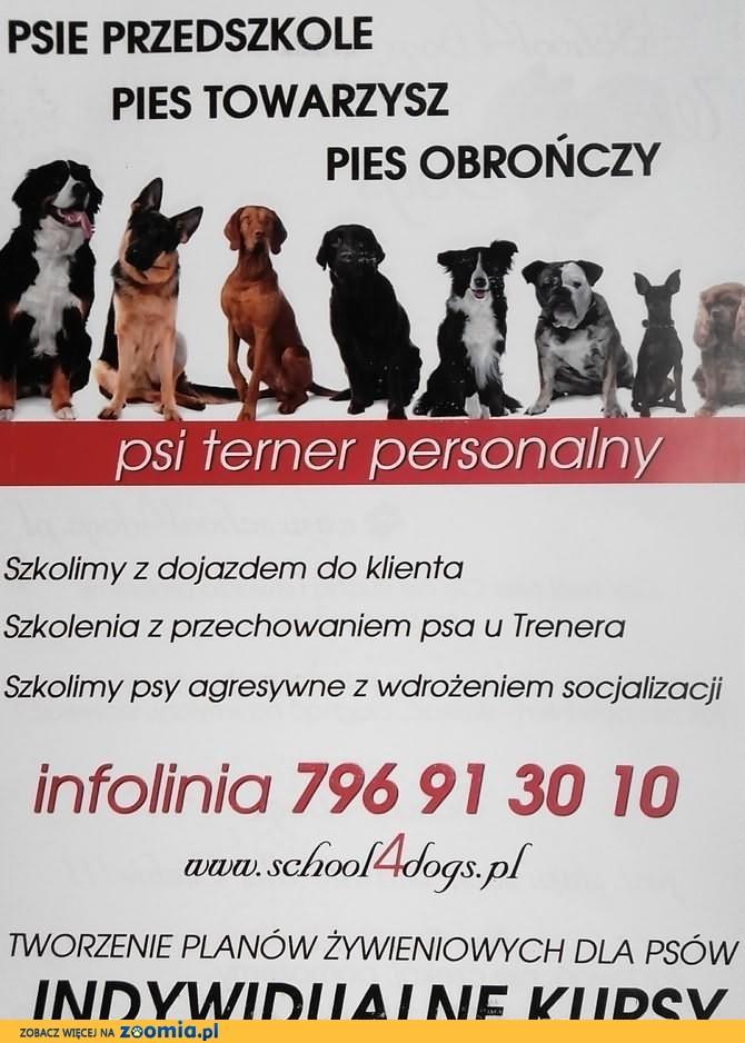 tresura-szkolenie psow-malopolska i slask