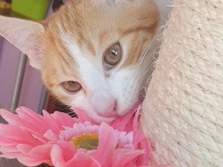 Do zakochania jeden kotalbo dwa   śląskie Gliwice