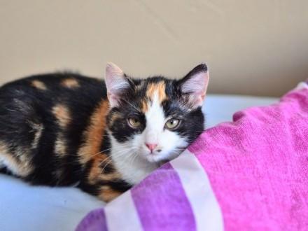 Przepiękna Aria z Fundacji Miasto Kotów - może przyjaciel dla Ciebie?